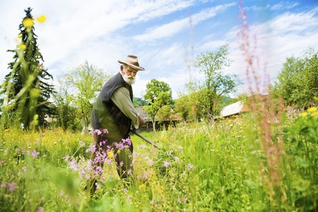 non urban 1: Old farmer with beard using scythe to mow the grass traditionally Stock Photo