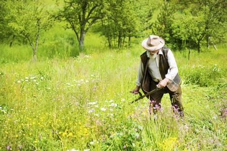 Oude boer met baard zeis met behulp van om het gras te maaien traditioneel