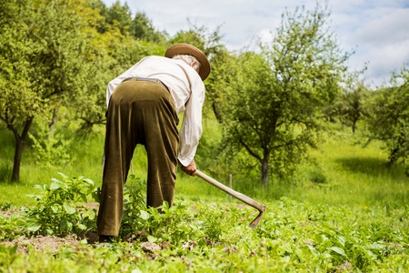 hoe: Old farmer with a hoe weeding in the garden