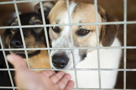 Un cane in un rifugio per animali, in attesa di una casa Archivio Fotografico - 29165358