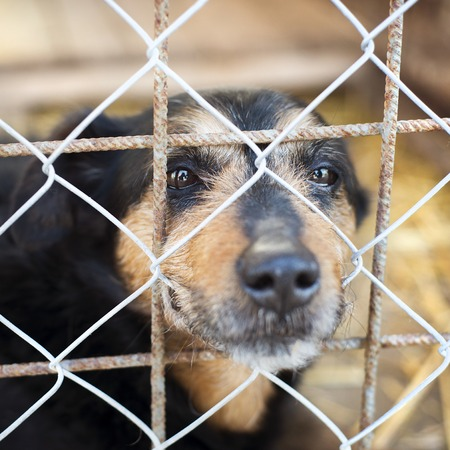 dog kennel: A dog in an animal shelter, waiting for a home