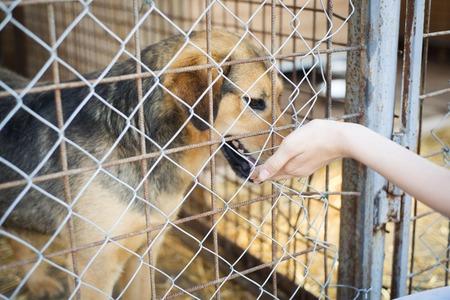 家を待っている動物の避難所の犬