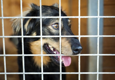 adopt: A dog in an animal shelter, waiting for a home