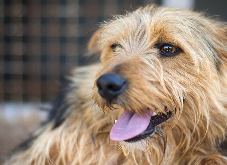 animals and pets: A dog in an animal shelter, waiting for a home