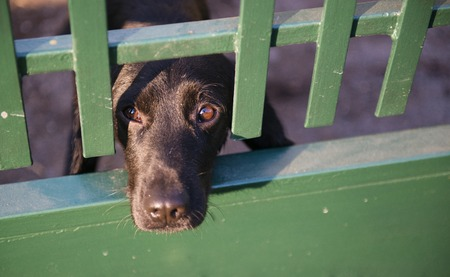 Cute black dog behind the garden fence