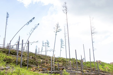 Destroyed forest as an effect of strong storm in High Tatras, Slovakia photo
