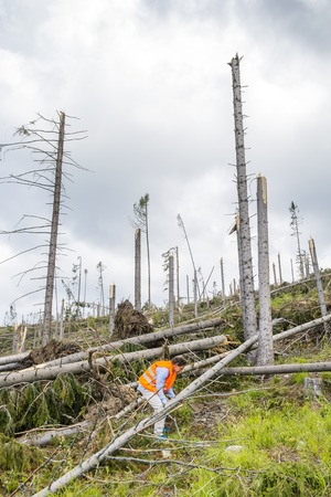 Rescue worker at destroyed forest as an effect of strong storm in High Tatras, Slovakia photo