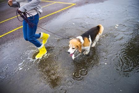 Couple walk dog in rain  Details of wellies splashing in puddles  photo