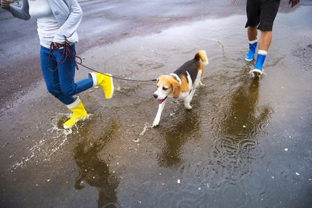 Couple walk dog in rain  Details of wellies splashing in puddles