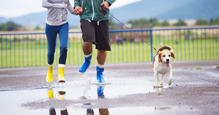 Couple walk dog in rain  Details of wellies splashing in puddles  photo