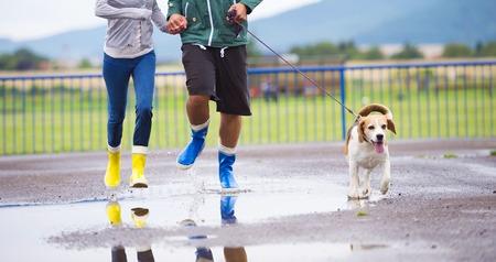 walk in: Couple walk dog in rain  Details of wellies splashing in puddles