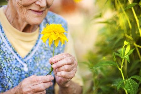 abuela: Detalle de la mujer mayor en el delantal con la flor amarilla en el jardín soleado