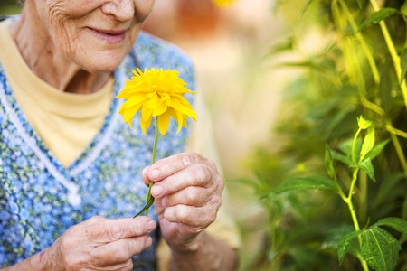 Detail of senior woman in apron with yellow flower in the sunny garden