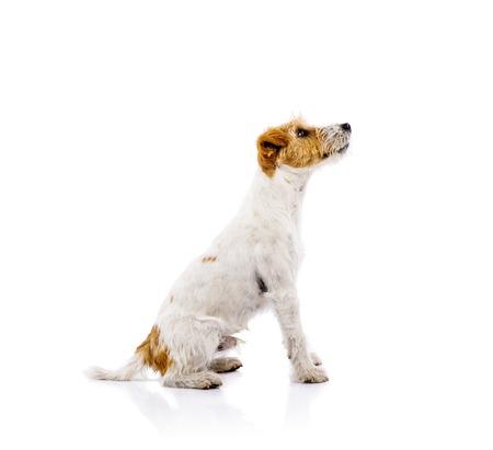 small white dog: Cute dog