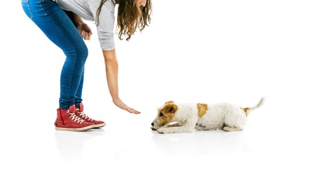 rant: Young woman training cute parson russell terrier dog isolated on white background