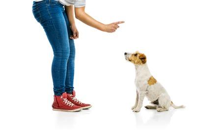 Entrenamiento de la mujer joven párroco lindo perro russell terrier aislado en fondo blanco