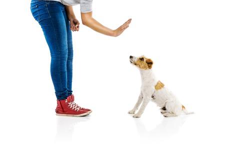 obediencia: Entrenamiento de la mujer joven párroco lindo perro russell terrier aislado en fondo blanco