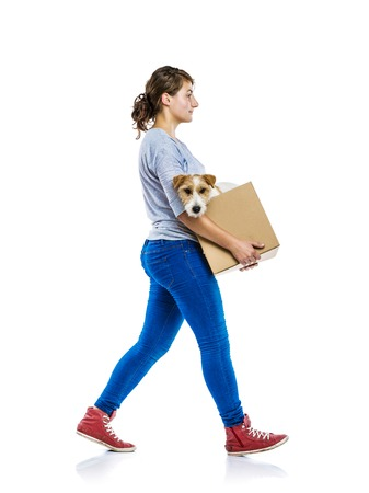 people walking white background: Young woman with her cute parson russell terrier dog in cardboard box moving, isolated on white background Stock Photo
