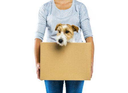 moving in: Unrecognizable woman with her cute parson russell terrier dog in cardboard box moving, isolated on white background