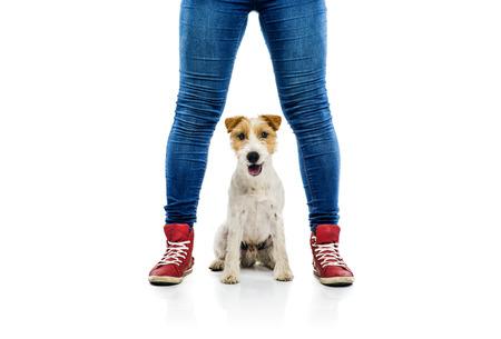 흰색 배경에 고립 된 소유자의 발에서 재생을 요구하는 귀여운 파 슨 러셀 테리어 강아지 스톡 콘텐츠