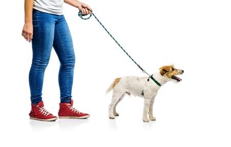 Leuke Parson Russell Terriër hond op lood op gang met zijn eigenaar, geïsoleerd op een witte achtergrond Stockfoto
