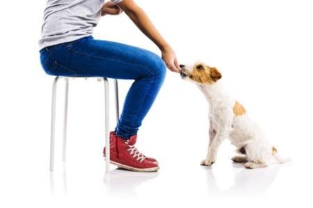 obediencia: Mujer irreconocible alimentar perro lindo parson russel terrier sobre fondo blanco aislado