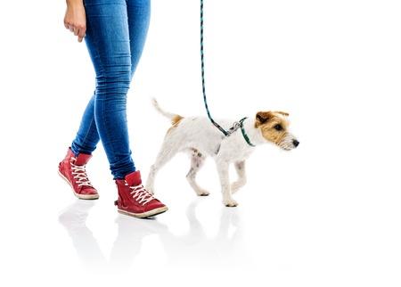 mujer perro: Parson russell terrier perro lindo sobre el plomo en pie con su due�o, aislado en fondo blanco