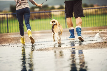 walk in: Young couple walk dog in rain. Details of wellies splashing in puddles. Stock Photo