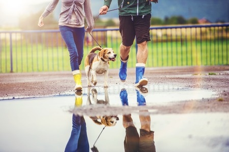 wet girl: Young couple walk dog in rain. Details of wellies splashing in puddles. Stock Photo