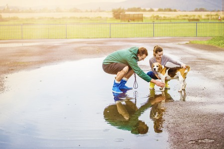 walk in: Young couple in colorful wellies walk beagle dog in rain. Stock Photo