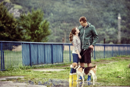 walking in the rain: Young couple in colorful wellies walk beagle dog in rain. Stock Photo