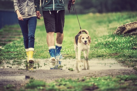 Young couple walk dog in rain. Details of wellies splashing in puddles. Stockfoto
