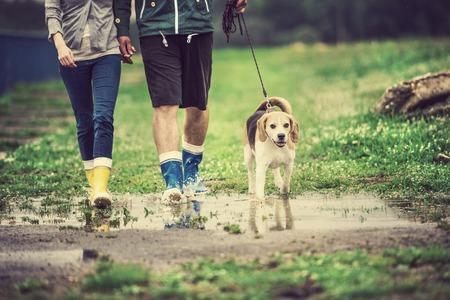 dogs playing: Perro pareja paseo joven en la lluvia. Detalles de botas de agua chapoteando en los charcos. Foto de archivo