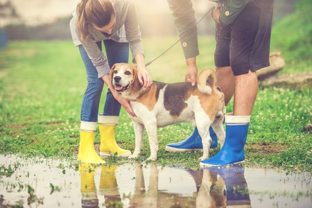 walking in the rain: Young couple walk dog in rain. Details of wellies splashing in puddles. Stock Photo