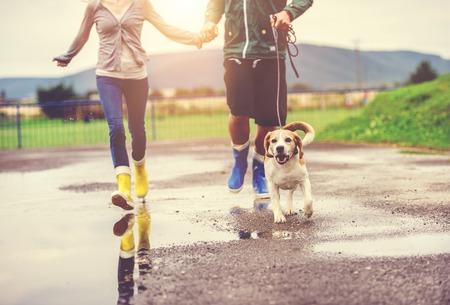 dog days: Perro pareja paseo joven en la lluvia. Detalles de botas de agua chapoteando en los charcos. Foto de archivo