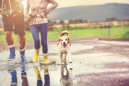 Young couple walk dog in rain. Details of wellies splashing in puddles. Stock Photo