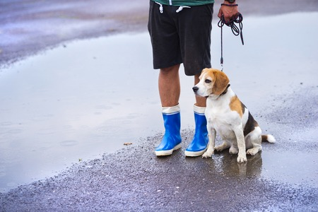 uomo sotto la pioggia: Giovane uomo che cammina il cane in caso di pioggia. Dettagli di gambe stivali di gomma