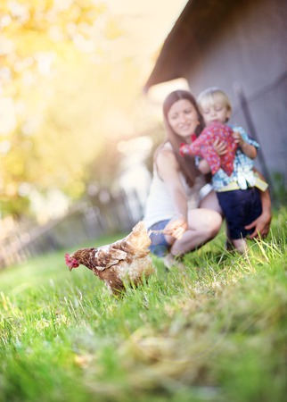 animal farm: Mother and son playing with chicken outside. They are on the farm.