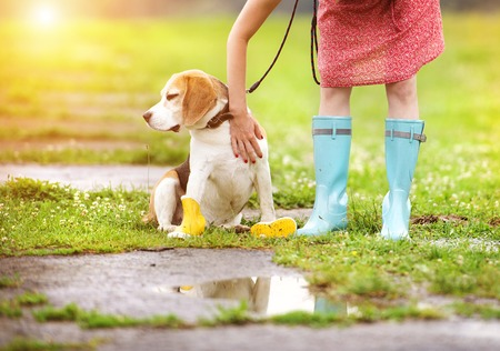 Young woman in dress and turquoise wellies walk her beagle dog in a park photo