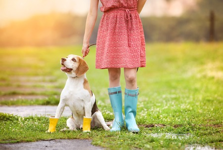 Young woman in dress and turquoise wellies walk her beagle dog in a park
