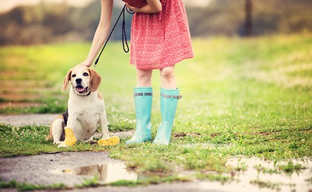 wet dress: Young woman in dress and turquoise wellies walk her beagle dog in a park
