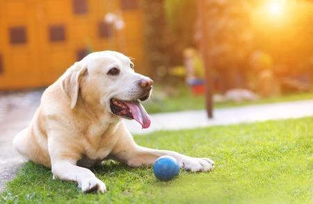perros jugando: Perro que juega en el jard�n con una peque�a bola azul Foto de archivo