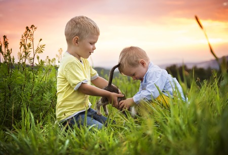 cat playing: Little boys playing with kitten and having fun outside in a park Stock Photo