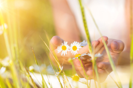 Unrecognizable woman on meadow holding flowers in her hands. Stock Photo