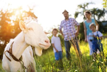 macho cabrio: Feliz familia joven pasar tiempo juntos fuera en la naturaleza verde con una cabra tiempo. Foto de archivo