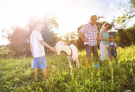 farm boys: Happy young family spending time together outside in green nature with a goat.