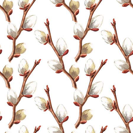 pussy willow: Hand drawn pussy willow branches background. Vector illustration.