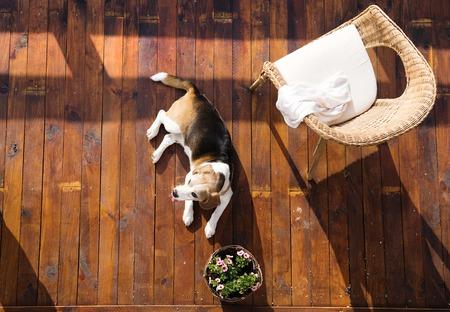 Hond liggend op een houten terras van een gezinswoning.