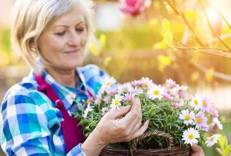 美しいシニア女性彼女の庭で花を植えること