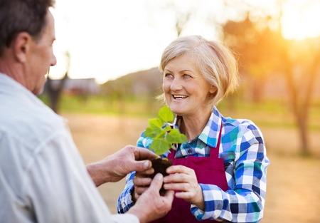 2 people: Senior couple planting seedlings in their garden